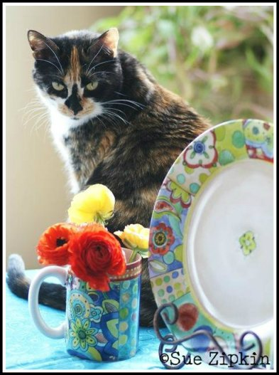 cat dinnerwear